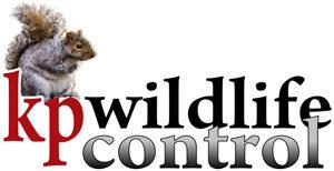 K.P. Wildlife Control: Home