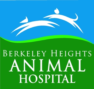 Berkeley Heights Animal Hospital: Home
