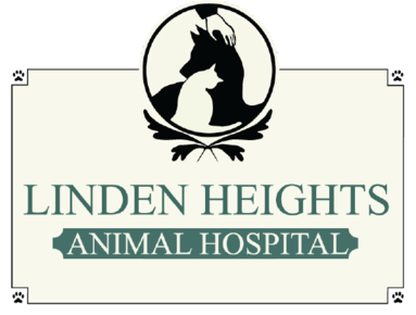 Linden Heights Animal Hospital: Home