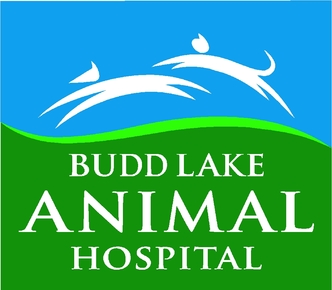 Budd Lake Animal Hospital: Home
