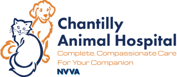 Chantilly Animal Hospital: Home
