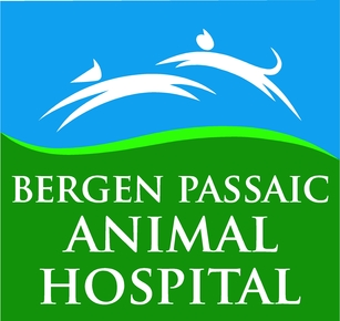 Bergen Passaic Animal Hospital: Home